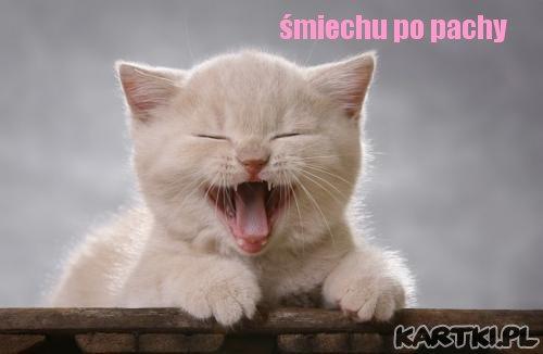 smiechu po pachy