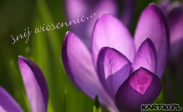 śnij wiosennie...