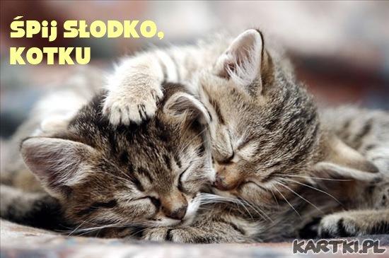 Śpij słodko, kotku