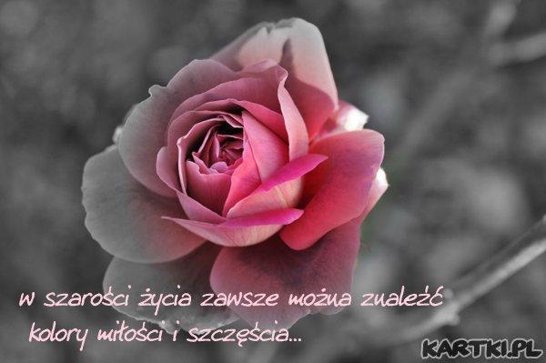 w szarości życia zawsze można znaleźć kolory miłości i szczęścia...zależy od nas czy potrafimy je dostrzec...