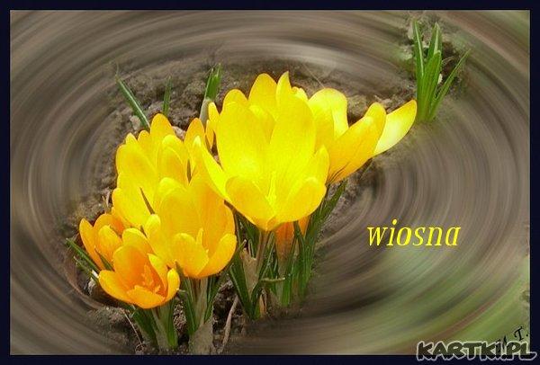 wiosna...**
