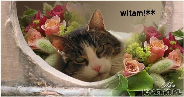 witam**