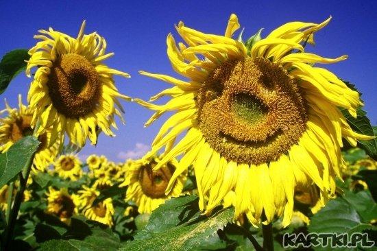 witam Cię uśmiechem...