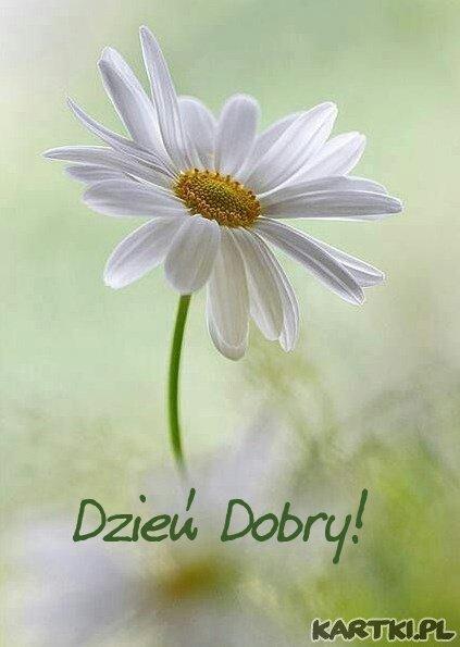 Witam i życzę miłego dnia!
