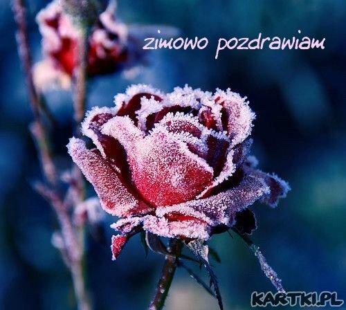 zimowo pozdrawiam