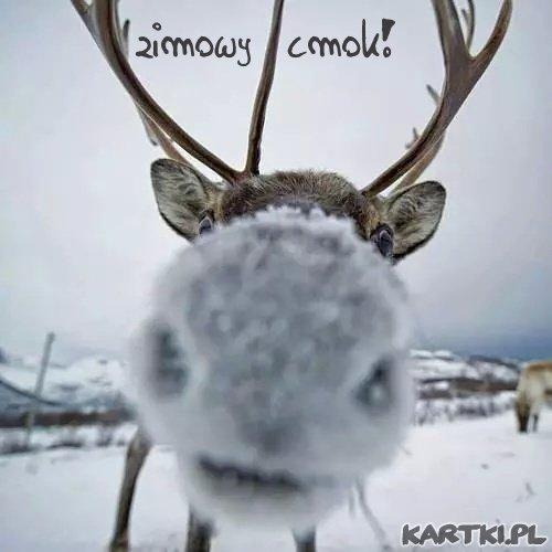 zimowy cmok i pozdrowienia dla Ciebie...
