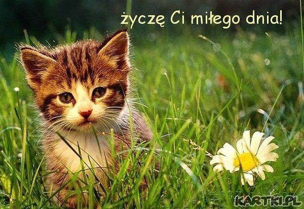 życzę Ci miłego dnia!