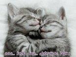 aaa...kotki dwa... dobranoc Wam