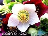 Adwentowe pozdrowienia-kwiatki dla Ciebie