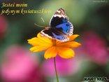Bądź moim kwiatkiem