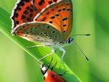 Biedroneczki są w kropeczki i to chwalą sobie, u motylka plamek kilka służy ku ozdobie...