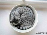 cup of kitty
