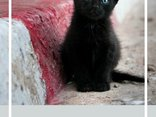 Czarne koty kradną serca a nie dusze