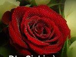 Dla Ciebie:)