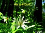 Do Wiosny jeszcze tylko ....... dni :)