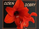 DZIEN DOBRY