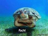 Foch !!!
