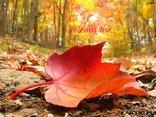 jesienny liść...