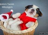 Jestem Twoim Mikołajem