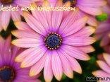 Jesteś moim kwiatuszkiem