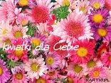 kwiatki dla Ciebie
