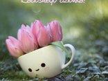 kwiatuszki na dzień dobry dla Ciebie