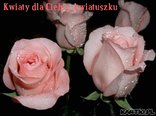 Kwiaty dla Ciebie, kwiatuszku