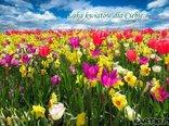 Łąka kwiatów dla Ciebie...