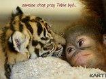 małpeczka i tygrysek