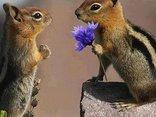 Mam kwiatka dla Ciebie ;)