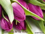 Mowa kwiatow: Tulipan - cieszę się, że cię widzę
