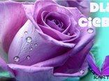 Najlepsze życzenia i różyczka dla Ciebie!