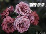Najpiękniejsze róże dla Ciebie