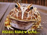 Pocałuj żabkę w łapkę...