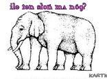 Policz ile słoń ma nóg