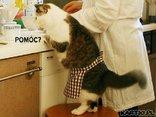 POMOC DOMOWA...**