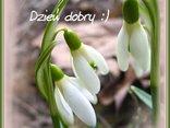 przebiśniegi...zwiastuny wiosny