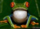 Przestań całować żaby. Czas rozejrzeć się za Księciem z Bajki.