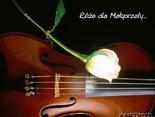 Róża dla Małgorzaty
