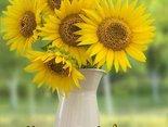 słoneczne pozdrowienia i miłego dnia życzenia...