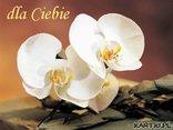 specjalnie dla Ciebie-Twoje ulubione orchidee