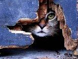 Szczęście zagląda z ukrycia