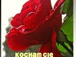 tak jak dla róży potrzebna jest woda,tak dla miłości czułe słowa...KOCHAM CIĘ