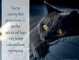 To,czy czarny kot przyniesie Ci pecha zależy od tego czy Jesteś człowiekiem czy myszą.