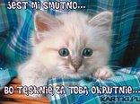 to ja, Twój kotek...tęsknię za Tobą okrutnie...