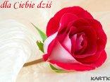 W mojej dłoni trzymam różę, to dla Ciebie dziś.