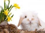 wielkanocny króliczek...♥