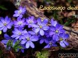 wiosenne kwiatuszki