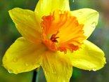 Wiosennie pozdrawiam i życzę miłego dnia!