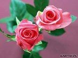 Witaj, różo ! Twój płatek się dziś pięknie rumieni...